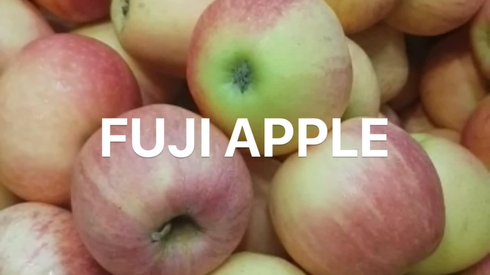 China Apple Die Niedrigsten Preis Frische fuji apple