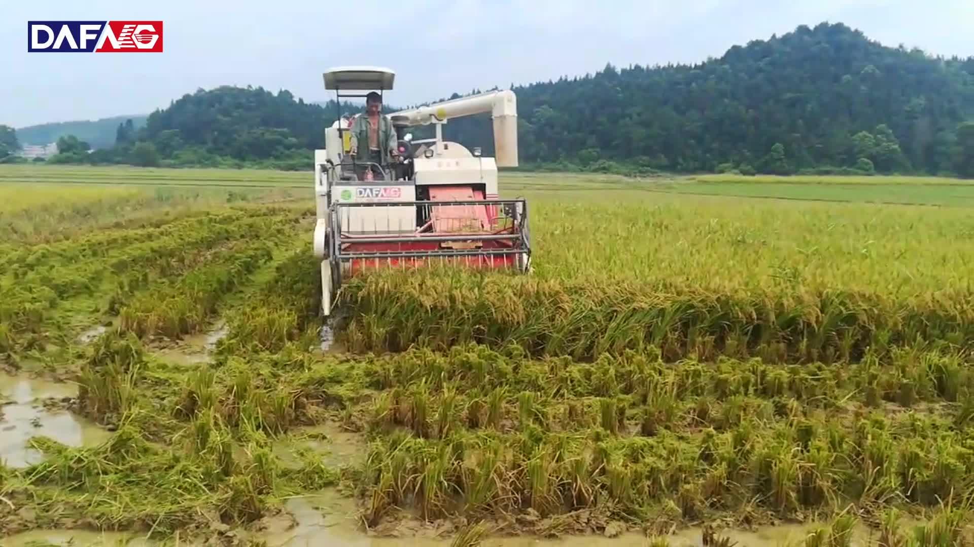 2019 nuevo tipo cosechadora de arroz con el mejor precio para la venta