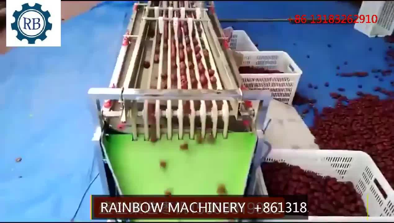 Dates grader and sorting machine by size /jujube  grading machine