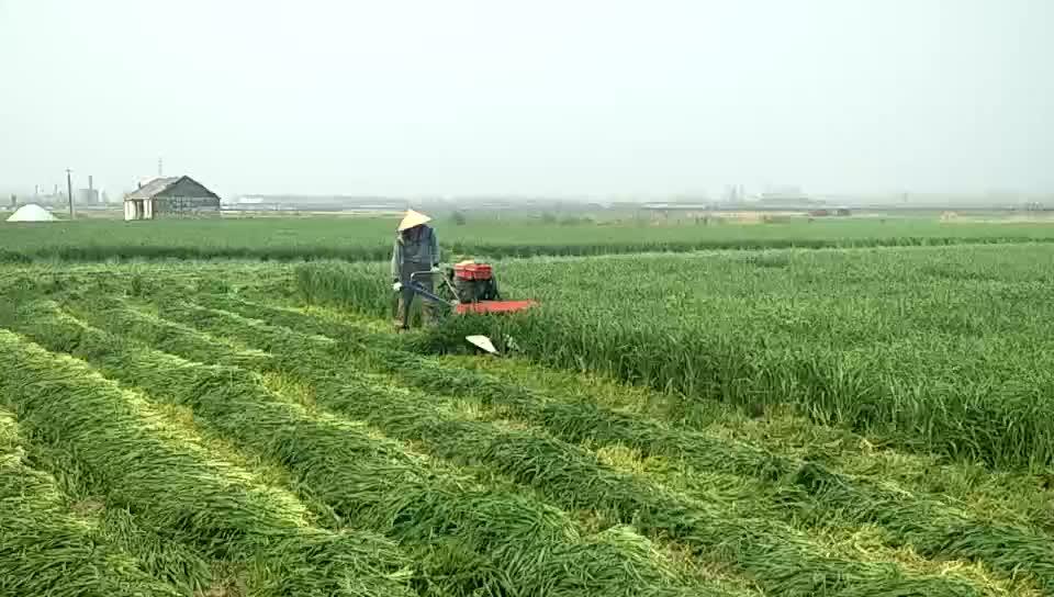 4G120A 쌀 수확 기계 manufacture 손 운전, 수확 기계 쌀 cutting machine price 에 안드라 프라,