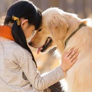 抱狗狗的方法与注意事项