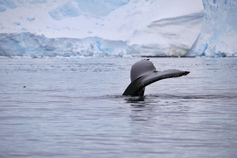 在南极除了呆萌的企鹅还能看到什
