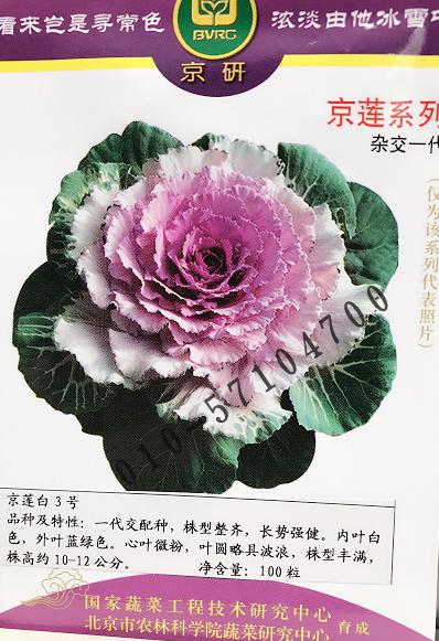 京莲白3号羽衣甘蓝种子