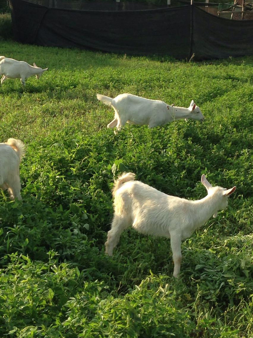 Провинция шаньси провинция сиань город свежий овец молоко нет добавить в подготовка контакт телефон 18691830978 не хорошо слово отступление
