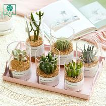 Succulent plant cactus potted ins plant indoor flowering cactus radiation resistant meat plant wanchongshan