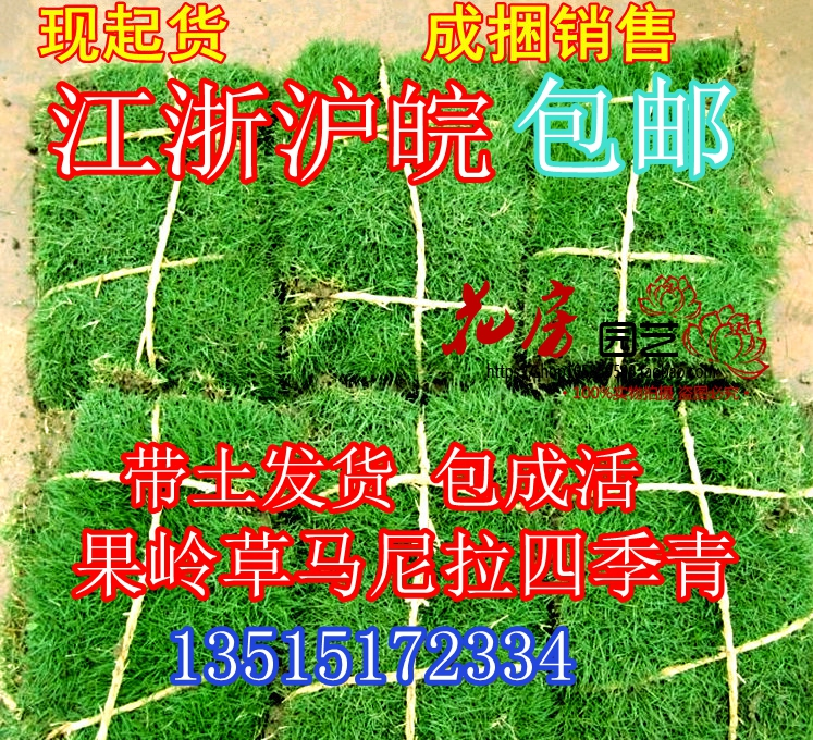 With clay grass lawn seeds Manila Four Seasons Shawl Ridge Grass Garden greening plants Jiangsu, Zhejiang and Shanghai