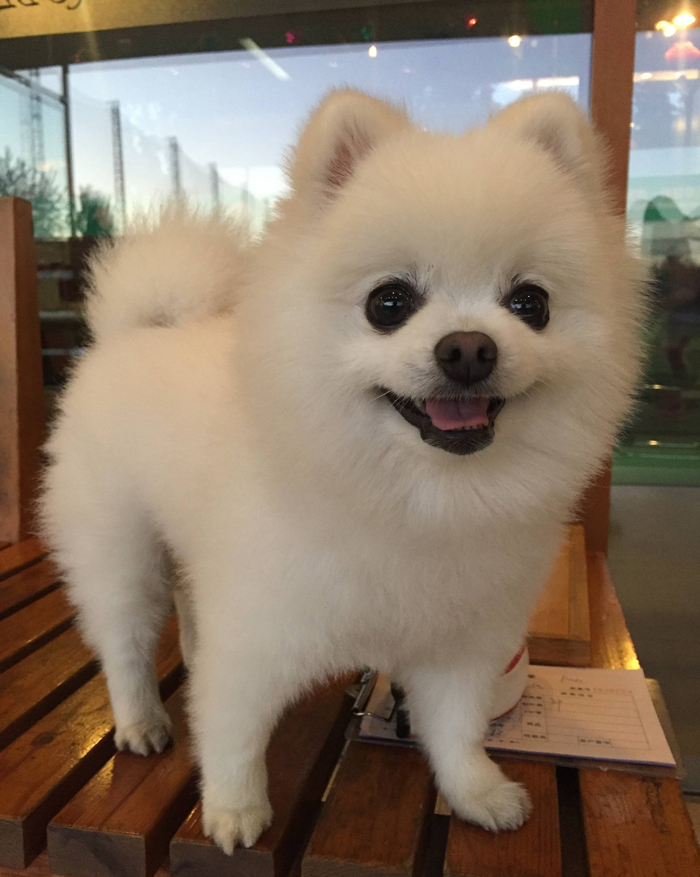 Tim Tian Dog Industry White Purebred
