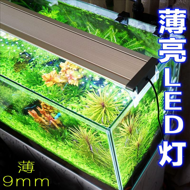Teedel Fish Tank Lamp Aquatic Lighting Fish Tank Lighting Hair Color  Waterproof LED Lamp Holder Seawater Cylinder Red Dragon Aquascape LED