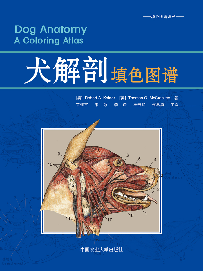 USD 31.12] (Free color pen)Canine Anatomy coloring map small animal ...