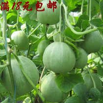 Seed of sweet melon seed fruit and melon seeds in Japan