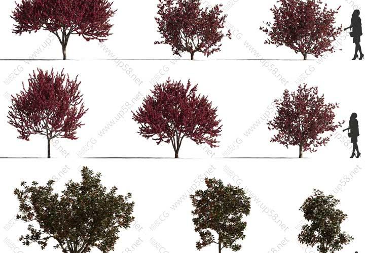 3DSMAX VRay Corana腊梅木兰欧洲樱桃精细室外植物3D模型