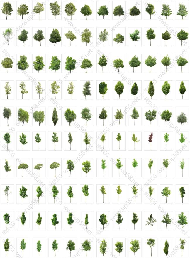 高清树木植物透明免扣背景平面设计素材