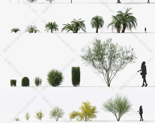 3DSMAX & VRay & Corona室外园林设计高精度树木植物3D模型素材库