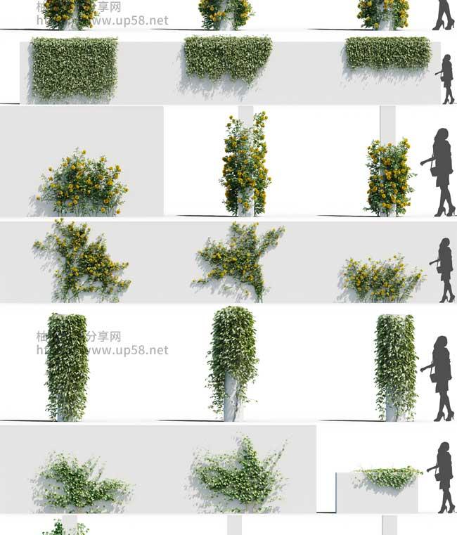 3DSMAX VRay Corona铁线莲地锦草原玫瑰葡萄室外树木植物精细3D模型