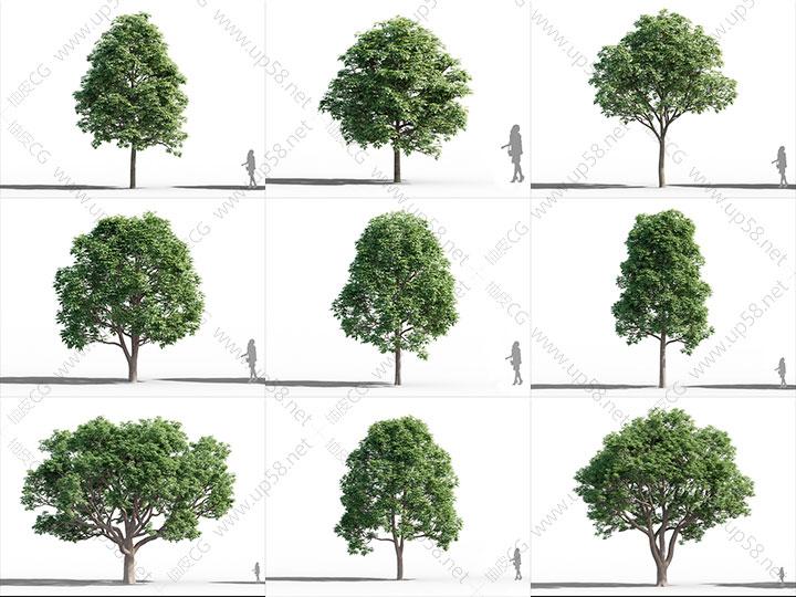 3DSMAX VRay Corona秋枫榉树七叶树朴树木芙蓉杜仲室外树木植物精细3D模型