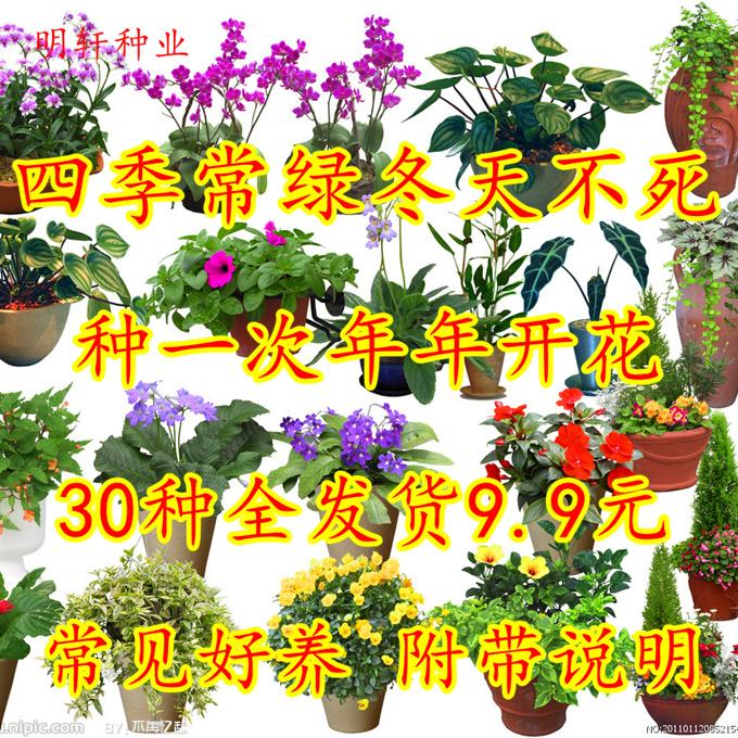 花花籽种子种易活花期长阳台盆栽四季绿植运费室内包邮免套餐花卉
