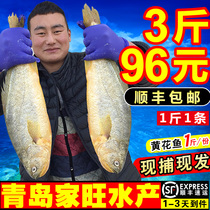Yellowfish Fresh seafood fish Aquatic fish seafood yellow fish frozen