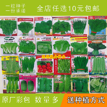 Vegetable SEED package Four Seasons Terrace Gardening garden Spring fruit bowl