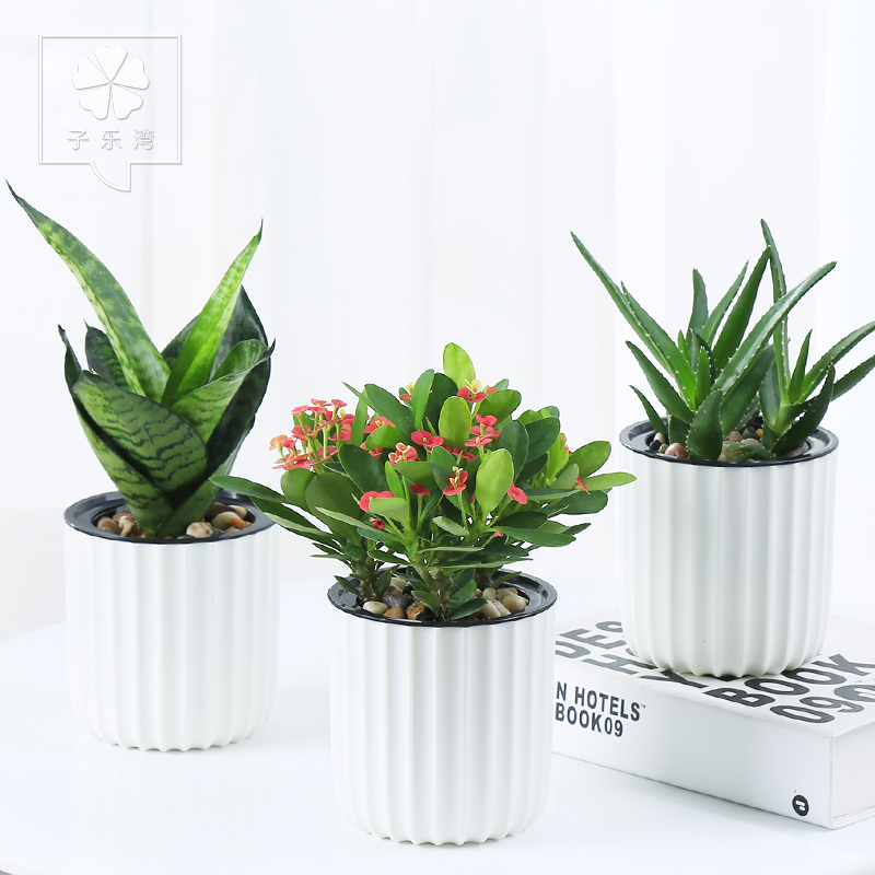Fortune Tree Green Plant Office Plants Potted Bamboo Gardenia Flowers Indoor Aloe Wen