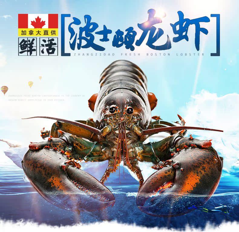 【獐子岛】波士顿鲜活龙虾500g 加拿大进口海鲜水产大龙虾活
