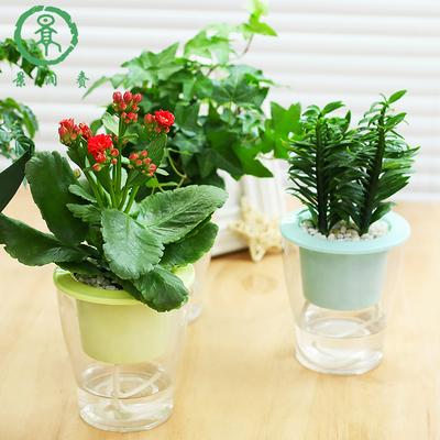 景润赉 室内水养小清新创意盆栽