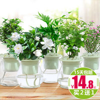 Gardenia jasmine green plant potted plant view flower green water indoor indoor green water гидропонный завод Jiulixiang rich bamboo