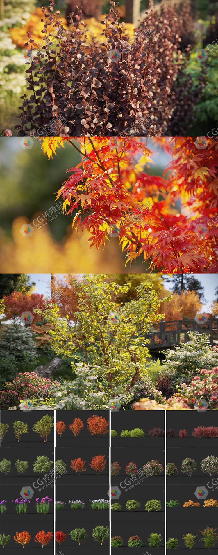 72种高质量3D树木灌木模型模型集合