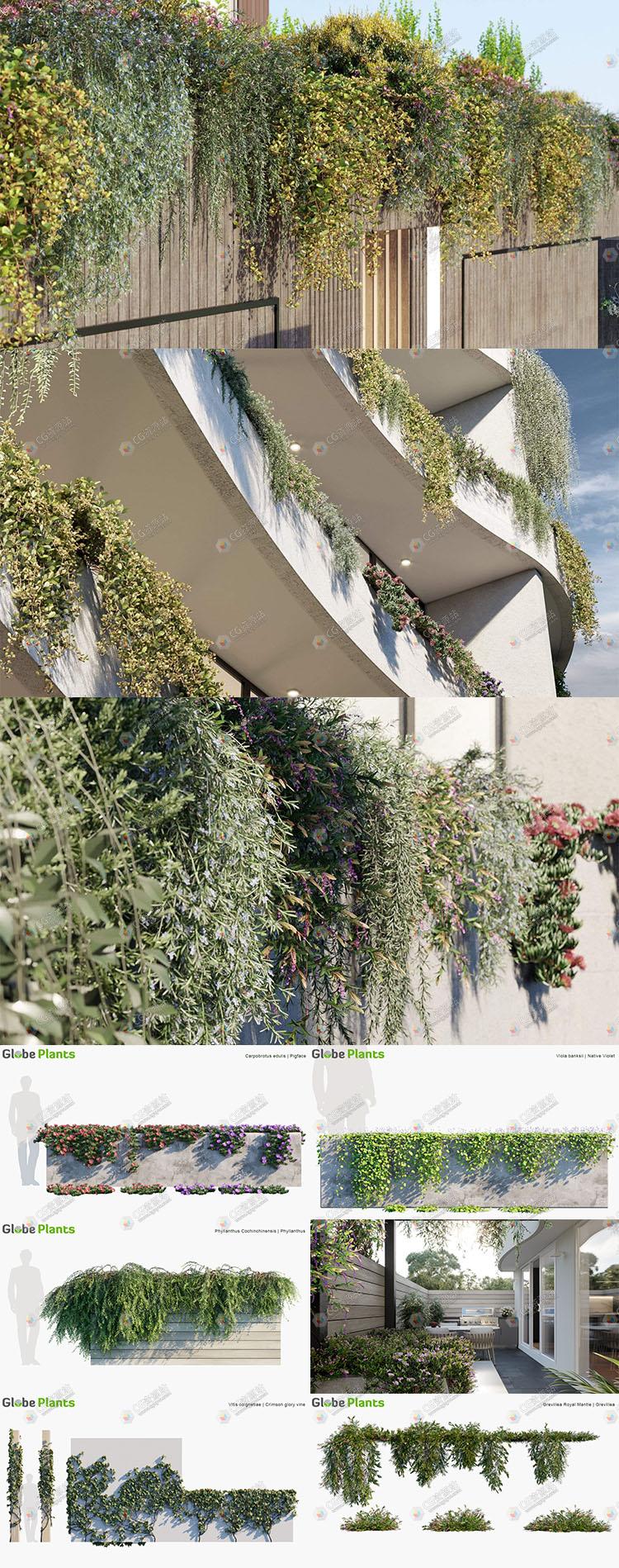 75组葡萄藤爬山虎植物3D模型合集