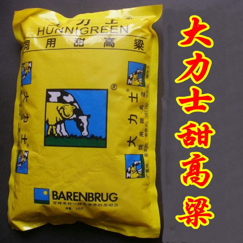 大力士饲用甜高粱种子百绿高产原装进口集团饲用牧草