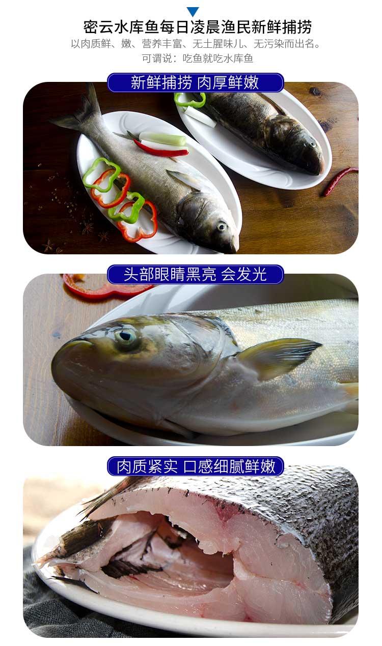 首农旗下 百年栗园 北京密云水库白鲢鱼 1.2kg/条 图3