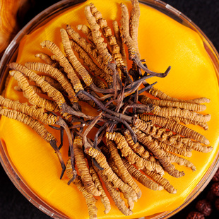 Two pieces of Cordyceps sinensis in Naqu, Tibet