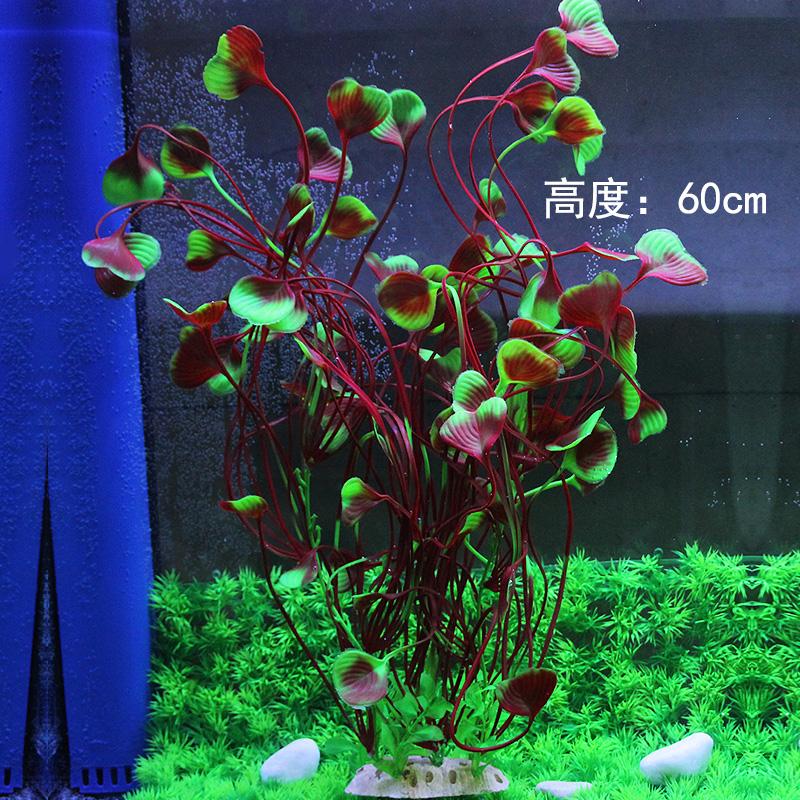 Цвет: Высокий 55 крупные цветы и широкие листья