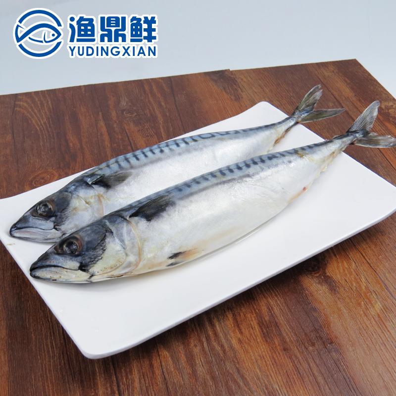 挪威活冻鲭鱼青花鱼400-500克/条煎烤炸俱佳可做寿司料理鲐鱼