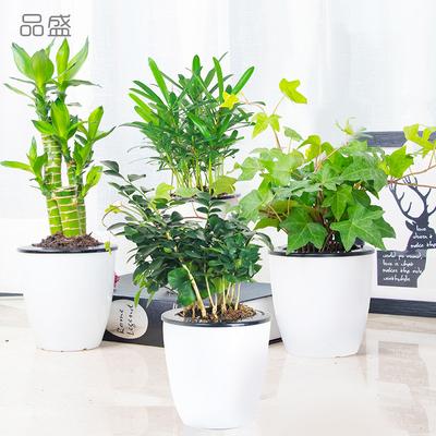 【品盛】室内绿植富贵竹发财树莲花竹盆栽