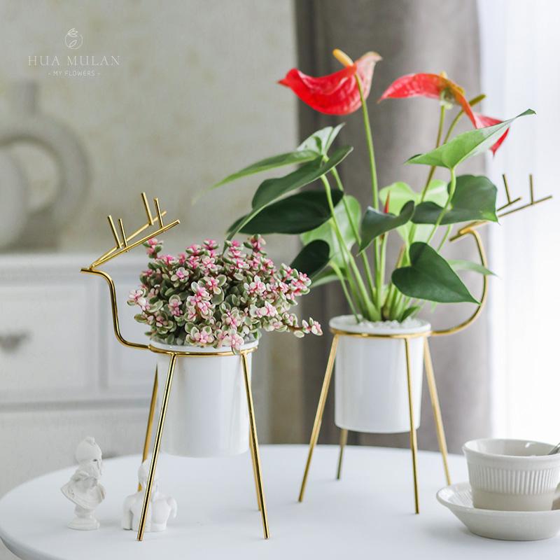 绿萝发财树花卉盆栽栀子室内办公室桌面文竹花好养盆景植物植物