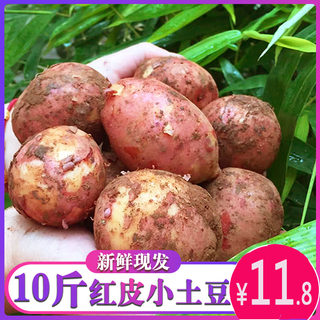 Yunnan small potatoes net weight 9 pounds fresh red skin yellow heart farmhouse planting potato powder glutinous potatoes are now dug the whole box