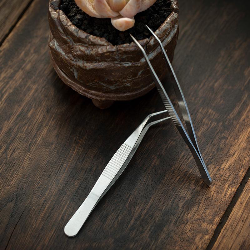 Khuỷu tay nhíp cây mọng nước trồng trong chậu tiện ích thịt mọng nước làm vườn cung cấp hoa mo bánh - Nguồn cung cấp vườn