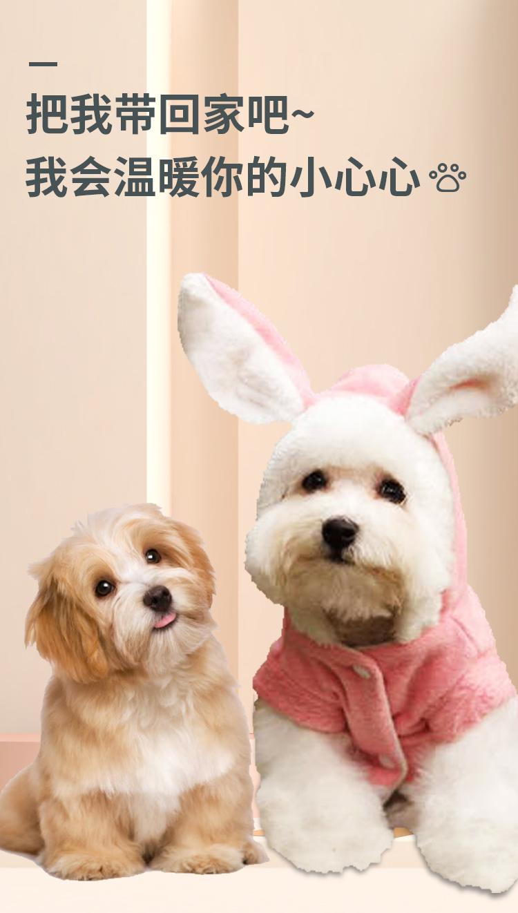 纯种小博美幼犬活体小茶杯犬宠物小狗狗长不大小型可爱球形俊介犬详细照片