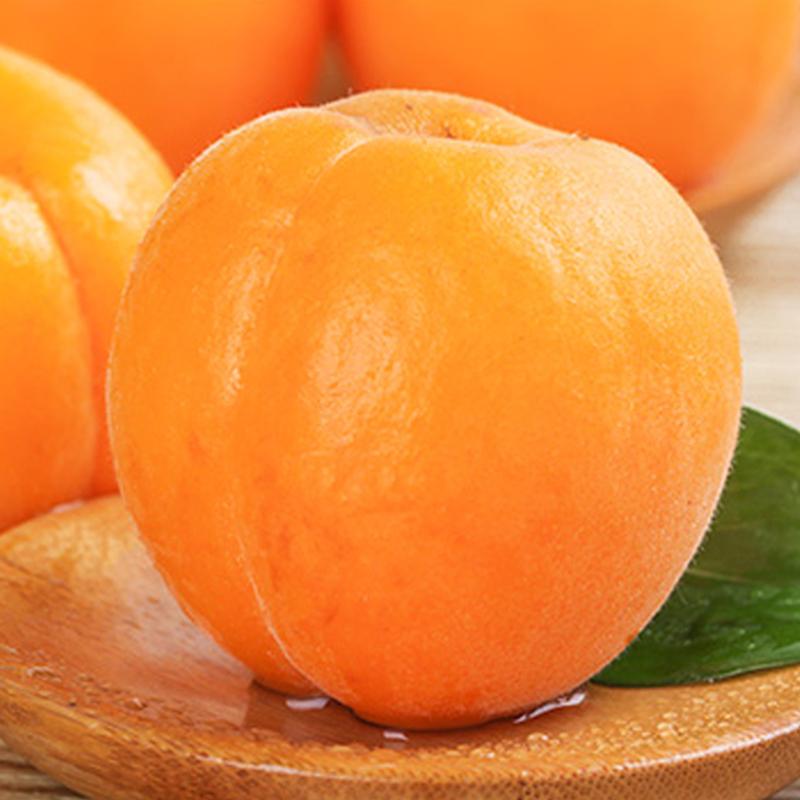 大黄杏新鲜山西杏酸甜杏5斤新鲜水果黄金杏金太阳杏陕西大黄杏