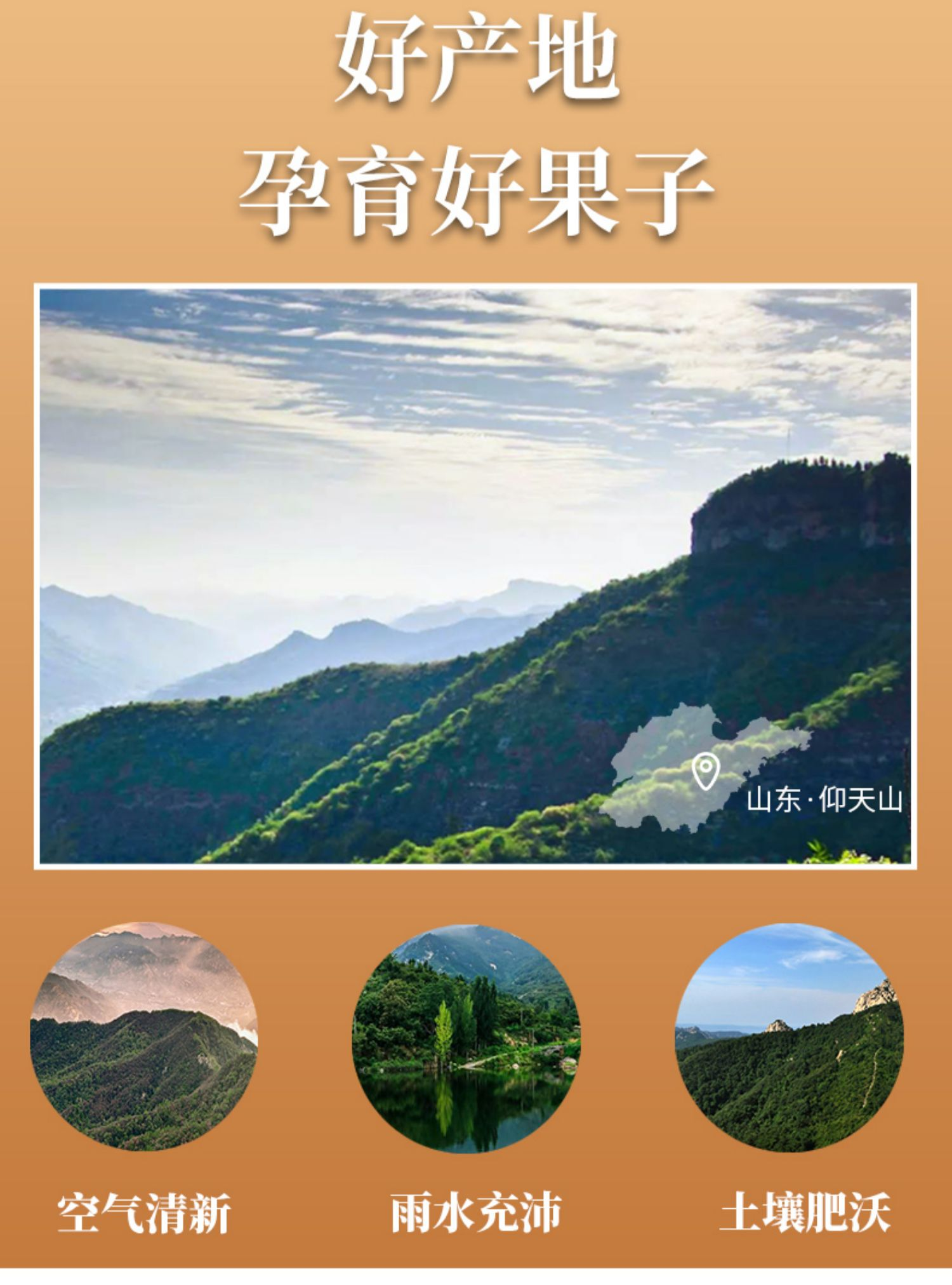 国丰桑葚陈皮山楂条2包