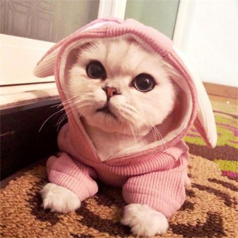 兔耳卫衣狗狗比熊泰迪法斗猫咪衣服宠物衣服