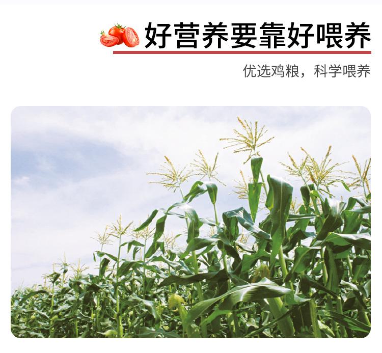 天猫超市 北京奥运会供应商 德青源 柴垛儿鲜鸡蛋 30枚装/1.29kg 图5