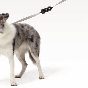遛狗这门技术活,牵引绳一定要选对了!