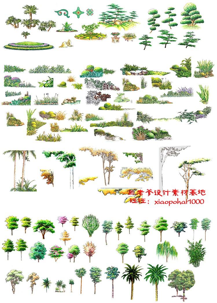 园林景观PS彩色总平面图案笔刷立面填充植物铺装psd分层设计素材插图(28)