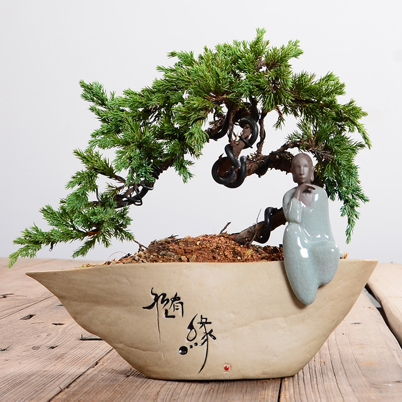 Usd 22 36 Rough Ceramic Bonsai Pot Breathable Bonsai Potted Ornaments Large Multi Meat Flower Pot Indoor Tabletop Flower Pot Wholesale From China Online Shopping Buy Asian Products Online From The Best
