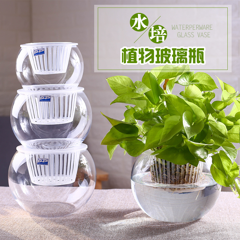 Usd 618 Water Cultivation Plant Utensils Hydroponic Green Radish