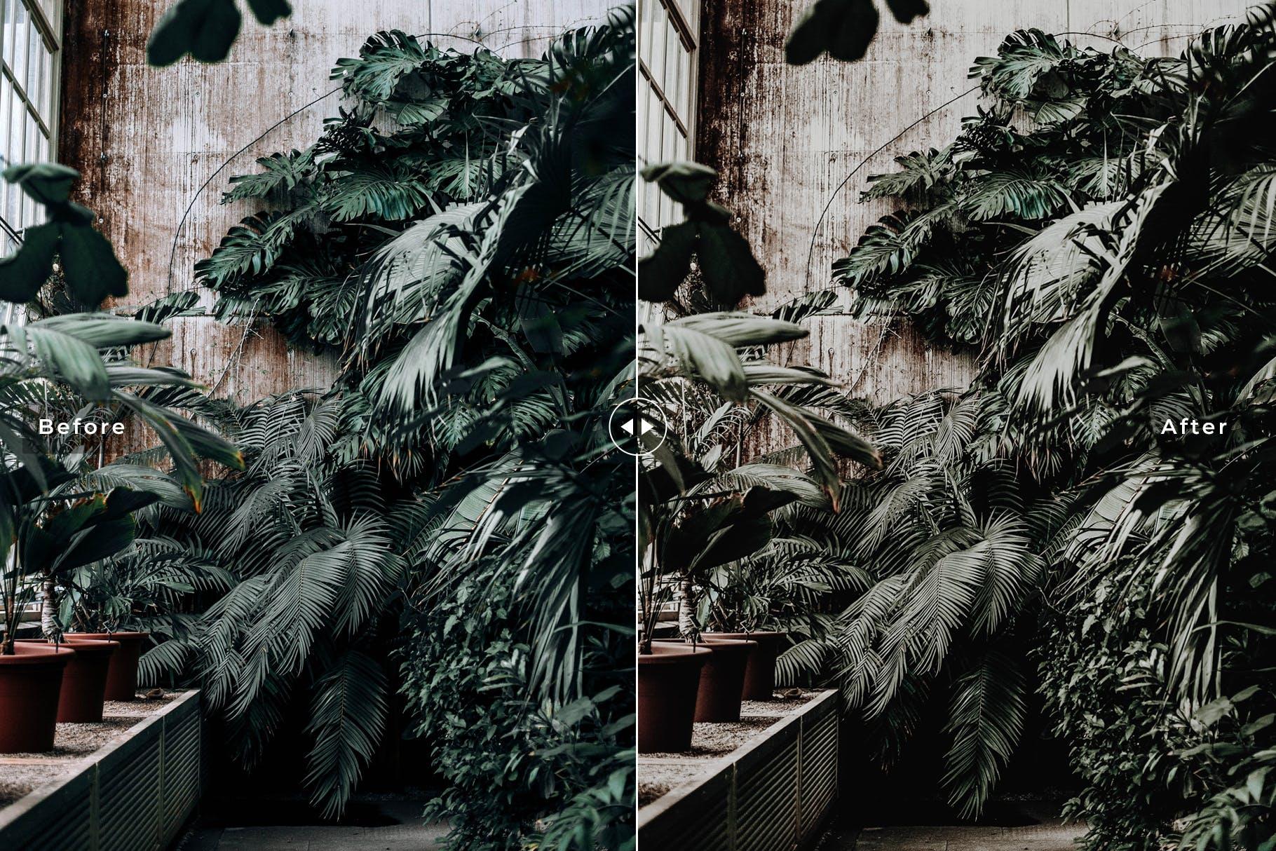 菜鸟也能产出大师摄影作品-LR照片调色预设 Botanical Mobile & Desktop Lightroom Presets设计素材模板
