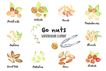 水彩坚果矢量插图 Watercolor Nuts Illustration