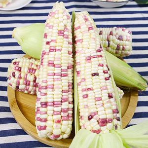 现摘新鲜花糯玉米8根10新鲜生吃甜玉米棒子粒粘糯黏苞谷米蔬菜包