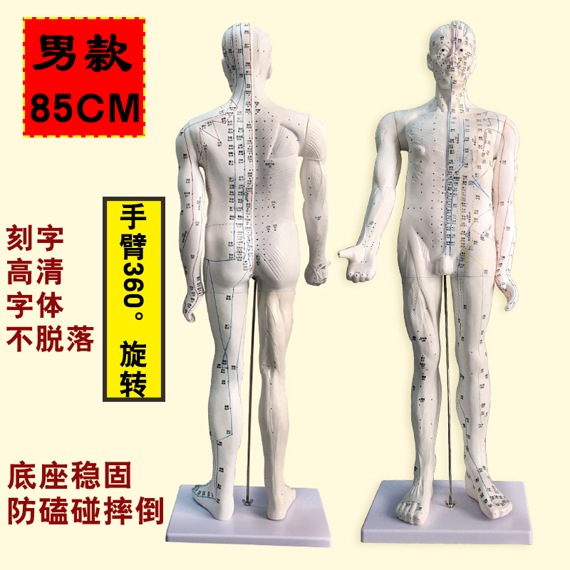 White Male Hard Model (digital Scale Marking) 85cm Luxury Medical Super Large Characters